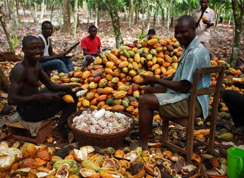 Ghánai kakaótermelő család munkában