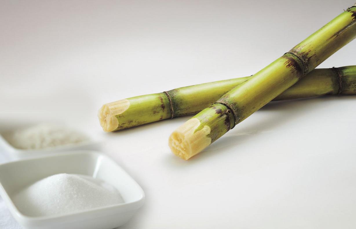 Cukornádból termelik a világ cukorkészletének nagy részét