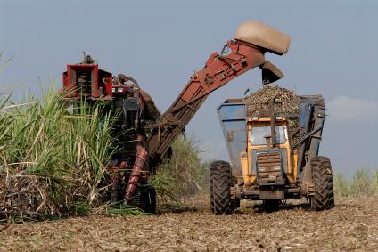 Cukortermelés Brazíliában. Forrás: grist.org, Conclude Zrt.