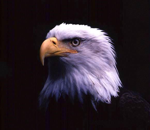 American Eagle befektetési aranyérme 1 uncia
