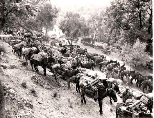 Öszvérkaraván Olaszországban a II. világháborúban. Forrás: custermen.com,  Conclude Zrt.