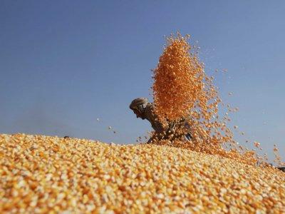 A búza kínálata nyomott, ezzel szemben a kereslet magas marad. Forrás: Businessinsider.com, Reuters, Morgan Stanley; Conclude Zrt.