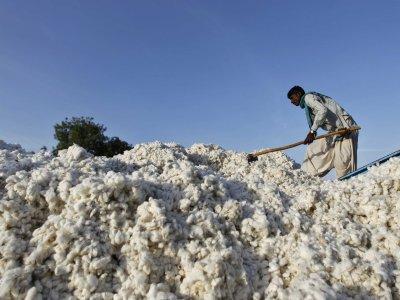 A gyapotárak a kínai felvásárlások hatására magasak maradnak. Forrás: Businessinsider.com, Reuters, Morgan Stanley; Conclude Zrt.