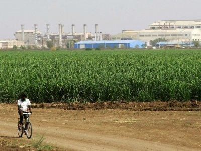 A cukor a zuhanó kereslettől szenved, miután Kína növeli cukornád-ültetvényei területét, ami az ázsiai ország importigényét mérsékli, így a globális túlkínálat fennmarad. Forrás: Businessinsider.com, Reuters, Morgan Stanley; Conclude Zrt.