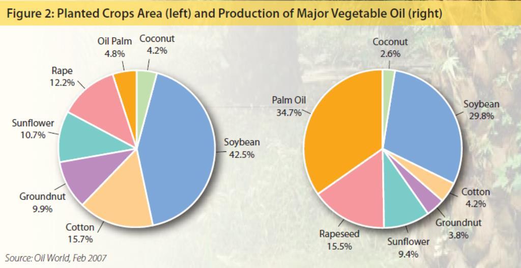 """Az olajpálma a leghatékonyabb növényi """"olajgyár"""". A világ olajnövény termőterületének mindössze 5%-a a pálmaolaj ültetvény, mégis ez állítja elő a növényi olajok 35%-át. ; Forrás: USDA, Wikipédia, MOPC, Conclude Zrt."""