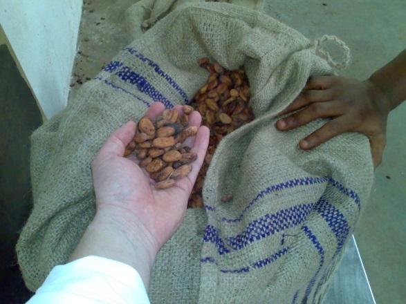 Export kakaóbab egy ghánai felvásárló raktárában. Fotó: Juhász Gergely 2011 Ashanti r.; Forrás: Hardman & Co., Conclude Zrt.
