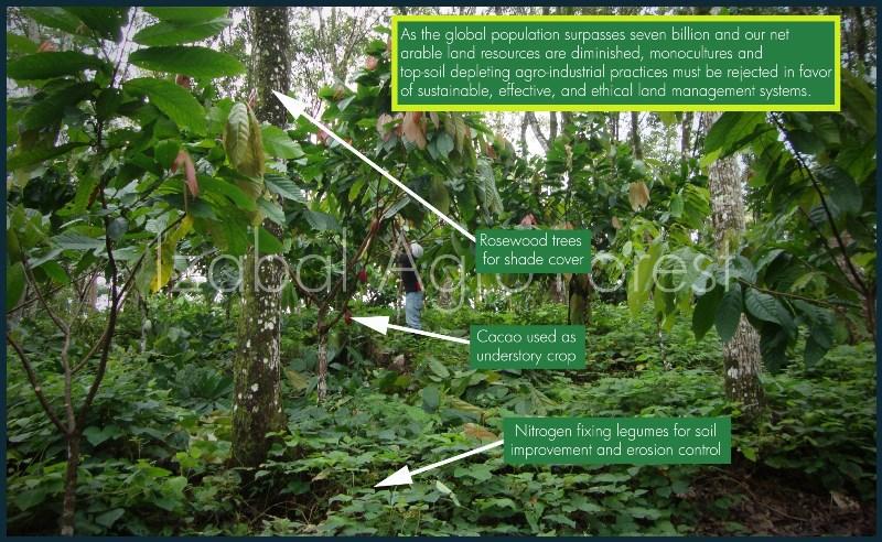 Natív vegetáció általi árnyékolásos, természetközeli kakaótermesztés; Forrás: Hardman & Co., Conclude Zrt.