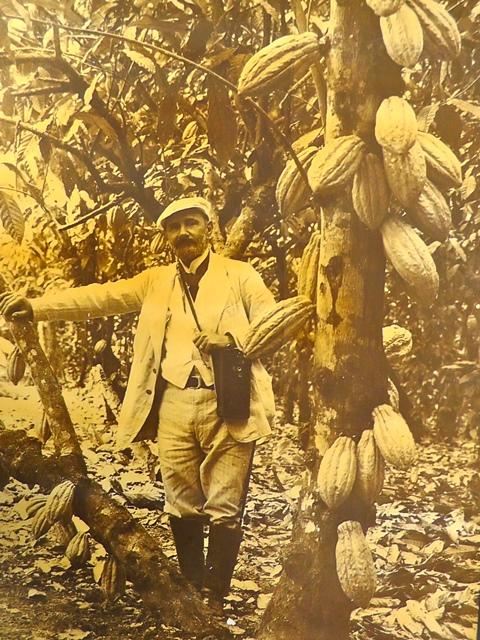National típusú kakaó Ecuadorban forrás: Cocoa Heritage Ecuador